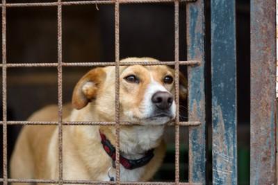 檻に入った犬