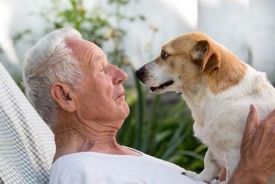 年配の男性と見つめ合う犬