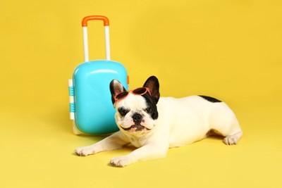 スーツケースとフレブル