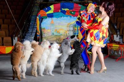 サーカスで芸をしている犬たち
