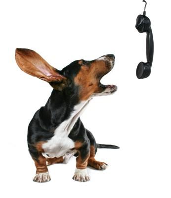 受話器に向かって吠える犬