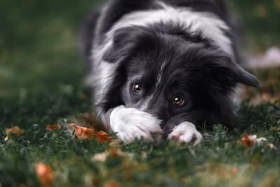 自分の口を前足でおさえる犬