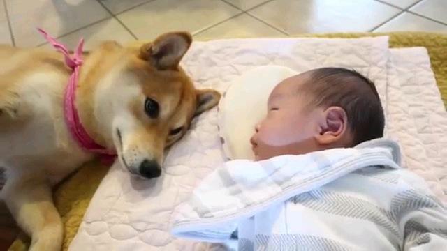 赤ちゃんの横に犬