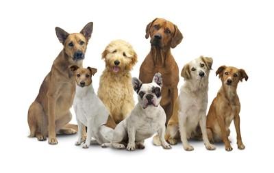 様々な犬種の7匹の犬