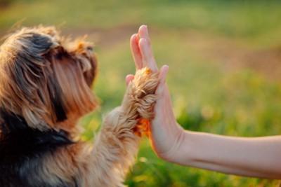 ハイタッチする犬と人