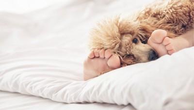 足の間にいる犬