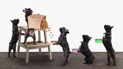 立って順番に餌をもらう犬たち