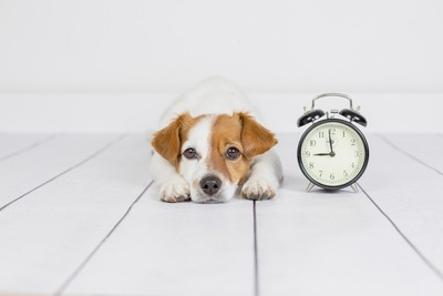 犬と時計の写真