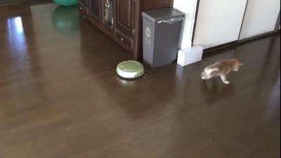 子犬が走ってロボットから逃げてる