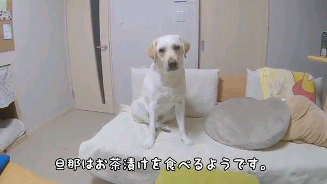 旦那は~字幕