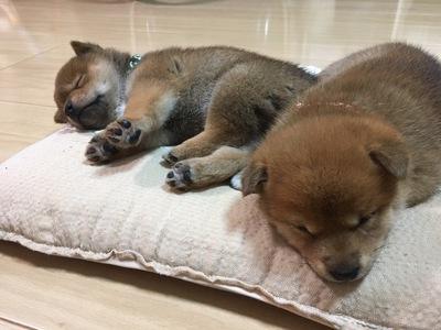 ayamamaさんの愛犬