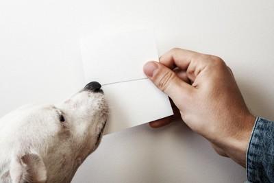 カードを持つ手と犬