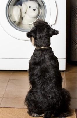 洗濯機の前に座る黒い犬の後ろ姿