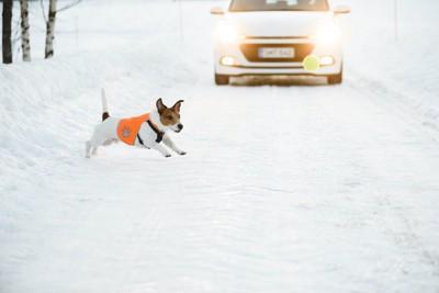車の前に飛び出すノーリードの犬