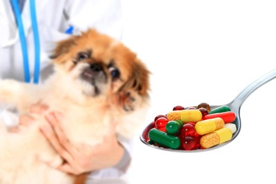 薬を見つめる犬2