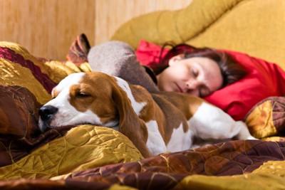 飼い主の方にお尻を向けて寝る犬