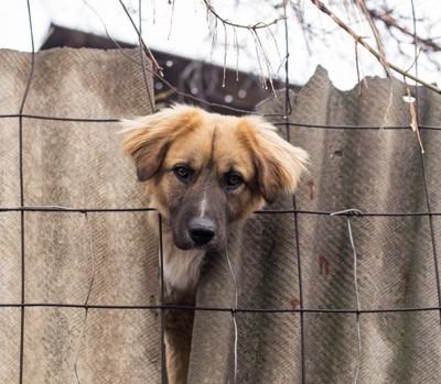 柵から顔を出している犬
