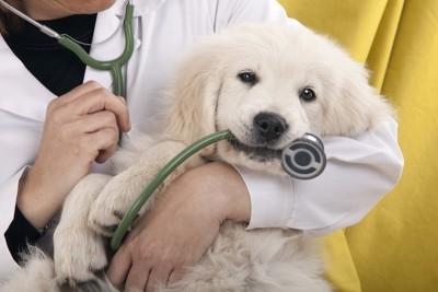 聴診器を咥える犬
