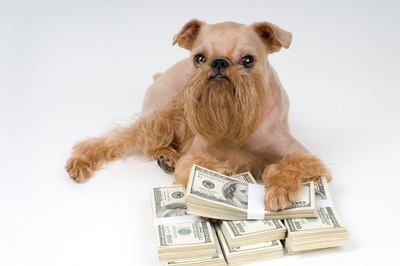 札束に手を置く犬