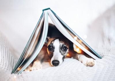 本の下に入る犬
