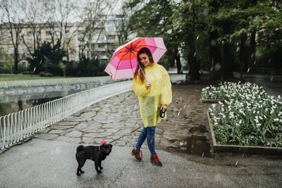 雨の日に散歩を楽しむ女性と犬