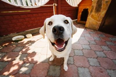 笑顔をみせる犬