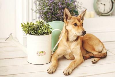 部屋に置かれた植物の横で伏せをする犬