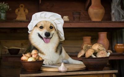 きのこを前に笑顔の犬