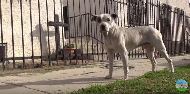 人を見つめる犬