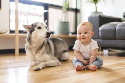 床に座る赤ちゃんとハスキー犬