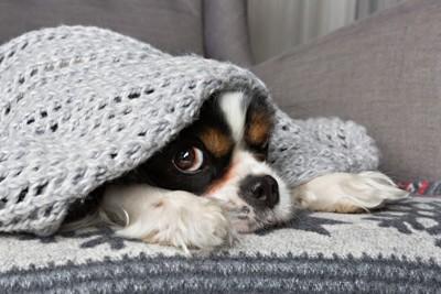 布の中で寝ている犬