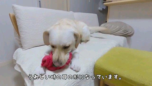うれしい時の~字幕
