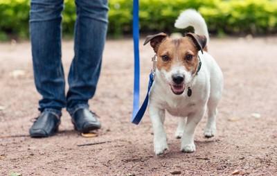 子犬と散歩