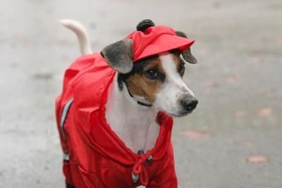 赤いレインコートを着た犬