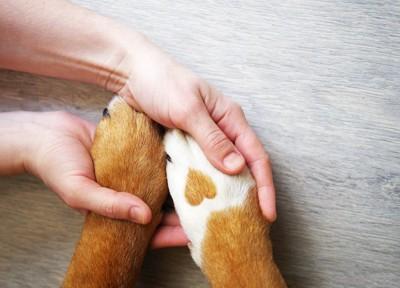 ハート模様のある犬の足とつないだ人間の手