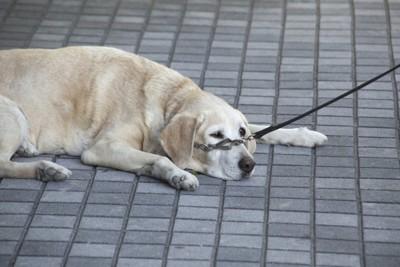道端に寝転ぶ犬