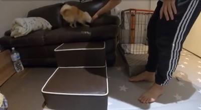 ソファの上にいる犬