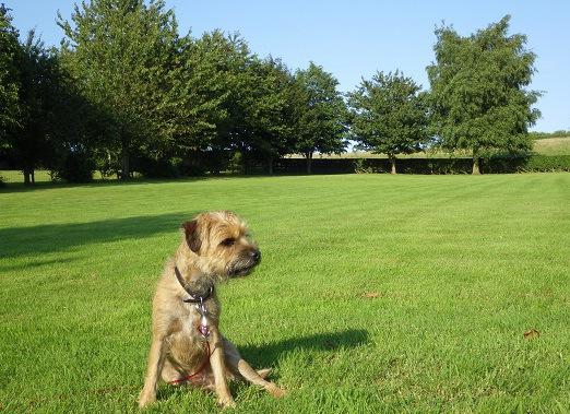 公園にいる犬