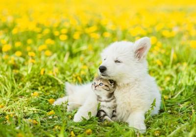 花畑で一緒にくつろぐ犬と猫