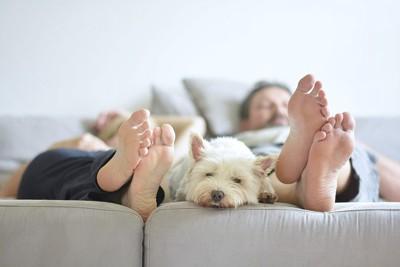 カップルの足の間でくつろぐ犬