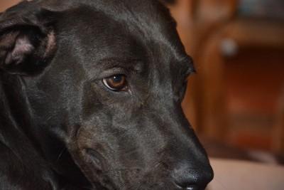 凹んだ表情の犬