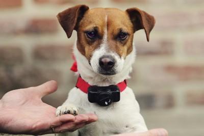 電気の首輪をつけられている犬