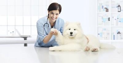 犬の肺に聴診器をあてる