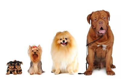 横に並んで座っている大きさの異なる犬