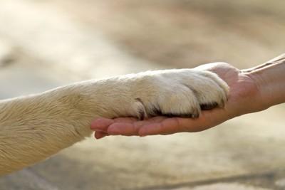 繋ぐ犬の手と人間の手
