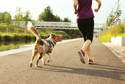飼い主を追いかける犬