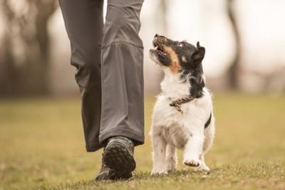 飼い主とアイコンタクトを取る犬