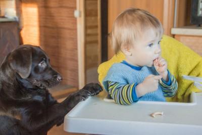 おやつを食べる子どもと黒い犬