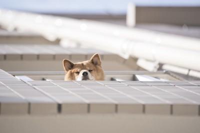 下を覗く犬