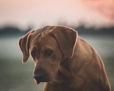 落ち込んでいるような表情をした犬